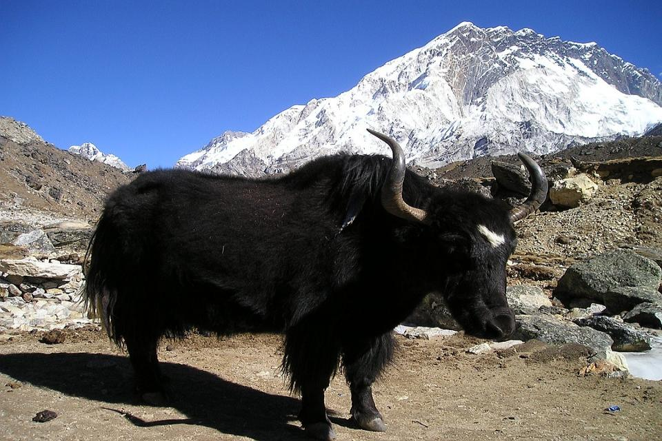 Reasons to go trekking in Nepal